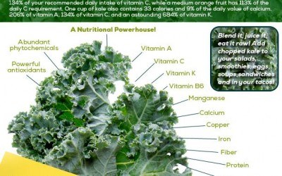 Ingredient of the Day   Kale